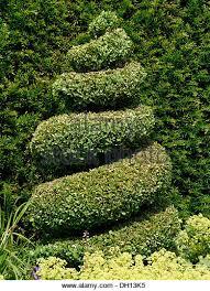 English Box Topiary - topiary box bush stock photos u0026 topiary box bush stock images alamy