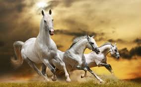 horses wallpapers and screensavers most beautiful pictures