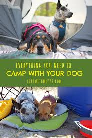 making a zip line for your dog campsite yards and dog