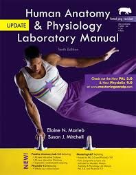 Essentials Of Human Anatomy And Physiology Book Online Online Anatomy And Physiology With Lab At Best Anatomy Learn