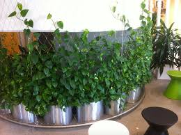 green wall for your office why vertical wall gardens are the new