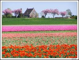 Netherlands Tulip Fields From Argentina To The Netherlands For Love Spotted In The