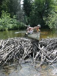 file beaver dam in algonquin park jpg wikimedia commons