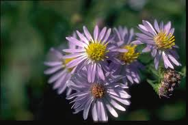 Names Of Purple by Forest Service Photo Of Purple Flowers With Yellow Centers