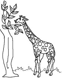 47 best giraffe color pages gianfreda net