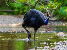 why fly flightless bird mystery solved say evolutionary scientists