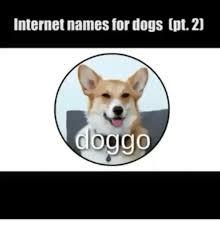 Internet Meme Names - internet names for dogs pt 2 oggo dogs meme on me me
