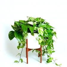 good inside plants indoor trees safe for cats marvelous hardy indoor plants good