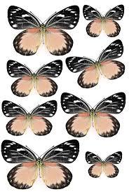 best 25 printable butterfly ideas on pinterest beautiful