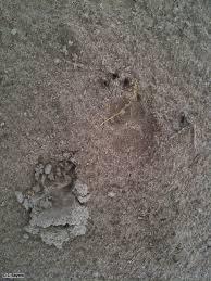 identification ontario badgers