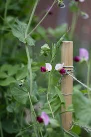 Best Soil For Vegetable Garden In Raised Bed by Vegetable Garden Inspiration U2014 Garden Bleu