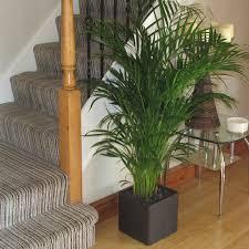 complete planters u2013 bentleys