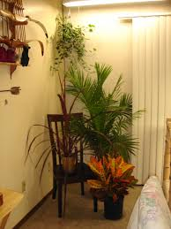 fresh plants closed casual chair on floor as decorating corners