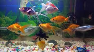 Home Aquarium Tips To Keep Your Fish Happy Healthy Home Aquarium Maintenance