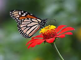 toshiba desktop wallpaper clovisso wallpaper gallery butterfly desktop backgrounds