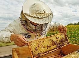 backyard beekeeping a homeowner u0027s guide