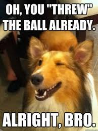 Oh You Dog Meme - the best of the winking gotcha dog meme pophangover