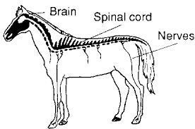 chapter 2 the animal body