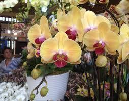 melbourne international flower and garden show pennys a idolza