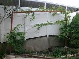 farmer u0027s market and grape trellising urbancompostsystems