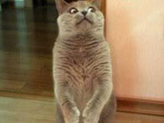 Scared Cat Meme - frightened memes image memes at relatably com
