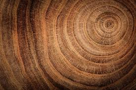 tree trunk pictures images and stock photos istock