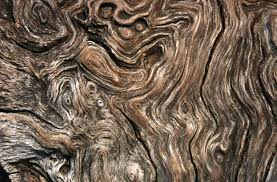 artwork wood grain the future is unique