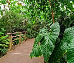 tropical pavilion brooklyn botanic garden