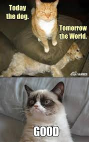 Dog Cat Meme - today the dog cat meme cat planet cat planet