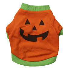 pumpkin costume halloween cute halloween costumes for small dogs i love my chi