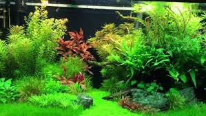 best led light for planted tank finnex planted plus 24 7 led light best and unique fish tanks