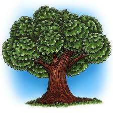 big tree digi st in digital images