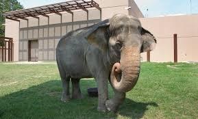 asian elephant smithsonian u0027s national zoo
