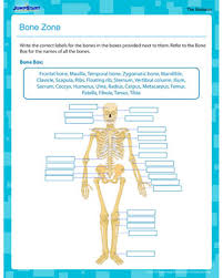 bone zone u2013 printable human anatomy worksheet for 5th grade