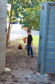 chickens and poodles austin family photography chad w adams