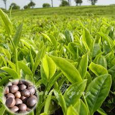 online get cheap ikea plants aliexpress com alibaba group