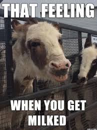 Horney Meme - horny cow is horny meme on imgur