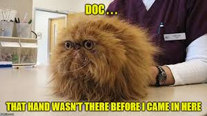 Dog Doctor Meme - you re in my negative space imgflip