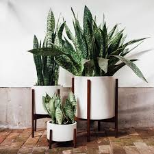 indoor plant poisonous houseplants 10 indoor plants for pet owners and parents