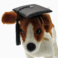 dog graduation cap mopp pictures of graduation dog