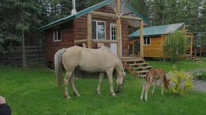 alaska horsemen trail adventures alaska guest ranch