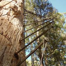 sydney the hills treetops sydney treetop bushfire lookouts in karri forest turn 75 climb them if