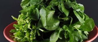 comment cuisiner le cresson le cresson lepidium sativum histoire propriétés et cuisine