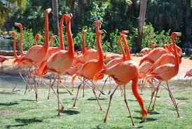 bergheim follies we got pink flamingos in the front yard