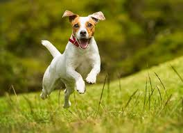 Hyperactive Dogs | how to calm a hyperactive dog petmd