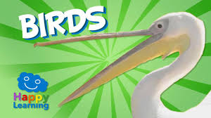 birds educational video for kids youtube