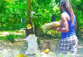 jamaikanische küche nachhaltige reisen in jamaika mit jamaikatour