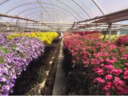 flower wholesale wholesale flowers wholesale plants fundraising event flowers