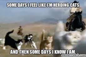 Herding Cats Meme - cats