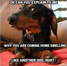 Dachshund Meme - best dachshund memes of all time